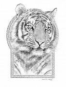 Harmony Drawings Posters - Panthera Tigris - Tiger the Circle of Life Poster by Steven Paul Carlson