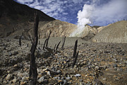 Bare Trees Metal Prints - Papandayan Crater, Java Island Metal Print by Martin Rietze