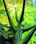 Translucent Paintings - Papaya Tree by Kevin Smith