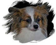 Akc Framed Prints - Papillon Framed Print by Larry Linton