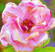 Altered Photograph Posters - Pappys Pink Rose Poster by Danielle Miller