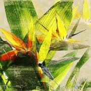 Montage Mixed Media - Paradisaeidae by Kaypee Soh - Printscapes
