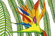 Bird Of Paradise Drawings - Paradise Flower by Lindsay Mangham