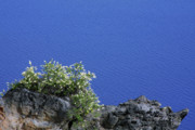 Water Plants Photos - Paradise for Backpackers - Crater Lake in Crater National Park - Oregon by Christine Till