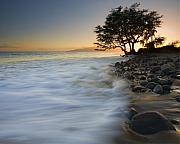 Sunset Seascape Prints - PAradise Gold Print by Mike  Dawson