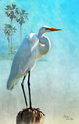 Great Egret Framed Prints - Paradise Lost Framed Print by Betty LaRue