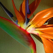 Bird Of Paradise Prints - Paradise Morning Print by James Temple