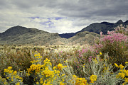 Sandia Mountains Photos - Paradise Mountain by Andrea Hazel Ihlefeld