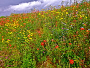 Texas Wildflowers Posters - Paradise Regained Poster by Chuck Taylor