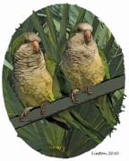 Parakeet Digital Art Posters - Parakeet Pair Poster by Larry Linton