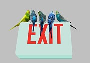Sat Digital Art - Parakeets . EXIT by Renee Trenholm