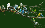 Parakeet Photos - Parakeets N Cockatiels by DiDi Higginbotham