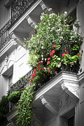 Flower Design Prints - Paris balcony Print by Elena Elisseeva