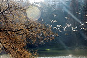 Flock Of Bird Framed Prints - Paris, Buttes Chaumont Framed Print by Calinore