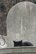 Cat Sitting On Cross Prints - Paris Cemetery - Pere La Chaise - Black Cat On Gravestone Print by Kathy Fornal