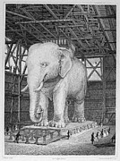Tusk Prints - Paris: Elephant Monument Print by Granger