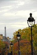 Lightposts Prints - Paris street Print by Elena Elisseeva
