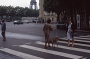 Crosswalk Photos - Parisian Crosswalk by Richard Amble