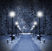 Snowy Night Night Posters - Park at Christmas Poster by Jaroslaw Grudzinski