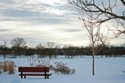 Snowpocalypse Framed Prints - Park Bench Framed Print by Angela Siener