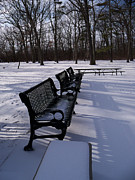 Park Benches Photos - Park Benches by Corinne Elizabeth Cowherd