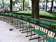 Park Benches Framed Prints - Park Benches Framed Print by Laura Kinker