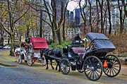 Horse Images Photo Framed Prints - Park Carriage  Framed Print by Chuck Kuhn