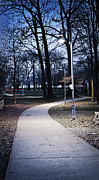 Lamps Posters - Park path at dusk Poster by Elena Elisseeva