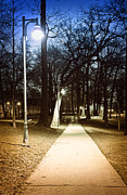 Night Lamp Photo Posters - Park path at night Poster by Elena Elisseeva