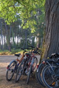 Bicycle Photos - Parked mountain bikes leaning against a tree trunk by Sami Sarkis