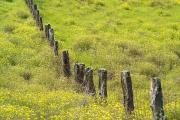Big Island - Hawaii - Parker Ranch Fence by Carl Shaneff - Printscapes