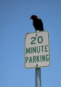 Sausalito Art - Parking Attendant by Rona Black