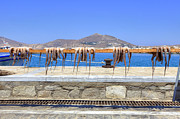 Squid Prints - Paros - Cyclades - Greece Print by Joana Kruse