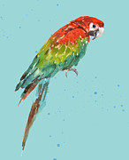 Parrot Art Framed Prints - Parrot - tropical bird Framed Print by Alison Fennell