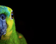 Animal Eye Prints - Parrot Print by by Marcio Anderson