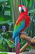 Parrot Print by Dawn Harris
