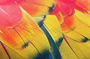 Markings Photo Prints - Parrot Feathers Print by Flash Parker
