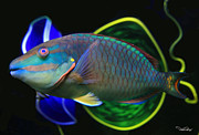Parrot Fish Metal Prints - Parrot Fish With Glass Art Metal Print by David Salter