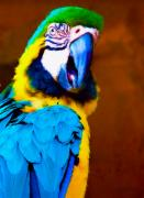 Parrot Metal Prints - Parrot II Metal Print by Kenneth Krolikowski