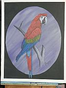 Amazon Parrot Paintings - Parrot by Jesus Raya Jr