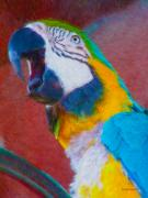 Parrot Metal Prints - Parrot  Metal Print by Kenneth Krolikowski