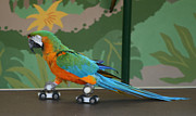 Roller Skates Photos - Parrot on skates by Ruth Hallam