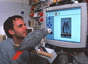 African-american Institute Photos - Parrot Playing With Computer by Volker Steger
