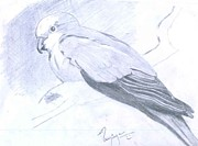 Parrot Print by Poornima M