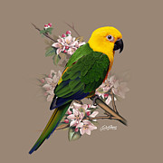 Parrot Mixed Media Prints - Parrot Print by Satish Verma