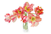 Parrot Tulips In A Glass Vase Print by Ann Garrett