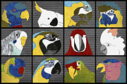 Veterinary Digital Art Prints - Parrots horizontal Print by Janet Carlson