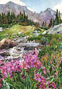 Colorado Mountain Stream Paintings - Parrys Primrose by Anne Gifford