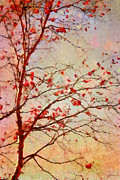 Autumn Trees Metal Prints - Parsi-Parla - d04c03t01 Metal Print by Variance Collections