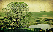 New Zealand Digital Art - Party Tree Hobbiton by Linde Townsend